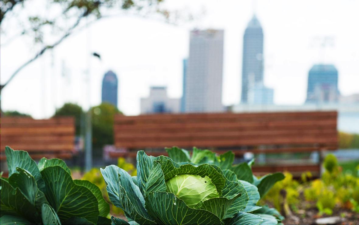 When to Upload: Urban Gardening
